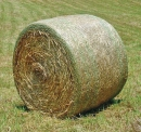 grass-hay