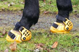 horse-boots
