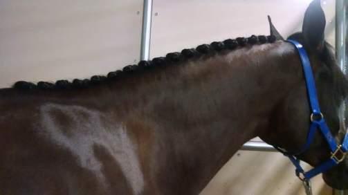 Sewn button braids