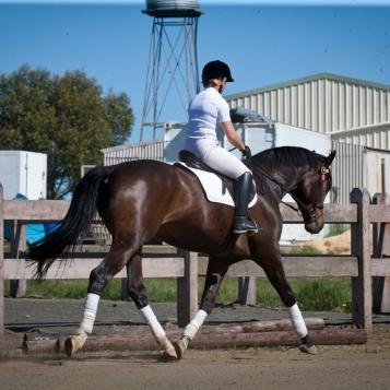 under saddle 2